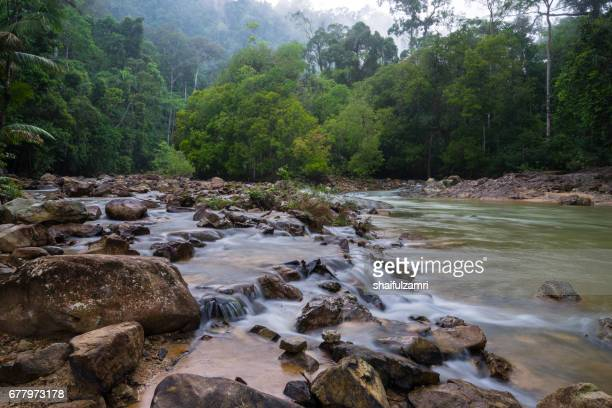 view of endau rompin national park, straddling the johor/pahang border, is the second designated national park in peninsular malaysia. it covers an area of approximately 80,000 hectares. - shaifulzamri stock-fotos und bilder