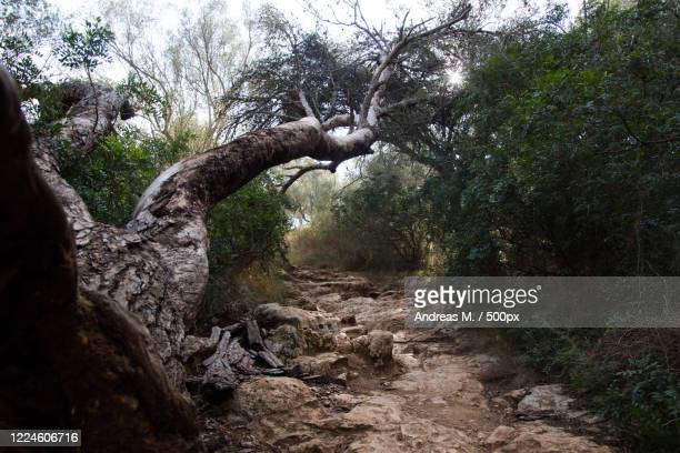 view of fallen tree hovering over path surrounded by bushes, cala varques, spain - derrota imagens e fotografias de stock