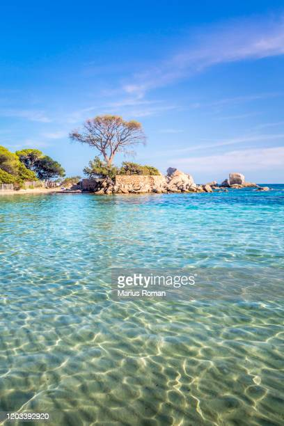 view of famous palombaggia beach with pine trees and azure sea, corsica island, france. - lagoon stock pictures, royalty-free photos & images