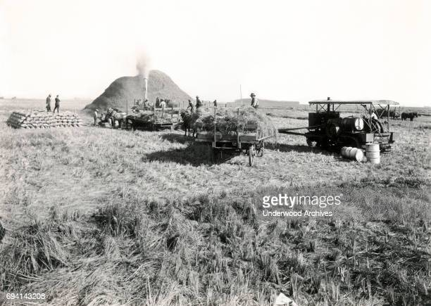 View of farmers and farm hands as they operate a threshing machine in a rice field Merced California circa 1900