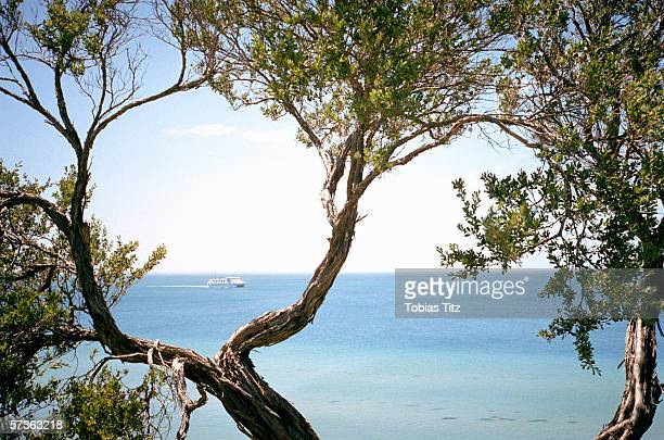View of ferry through tea tree branches, Port Phillip Bay, Melbourne, Australia