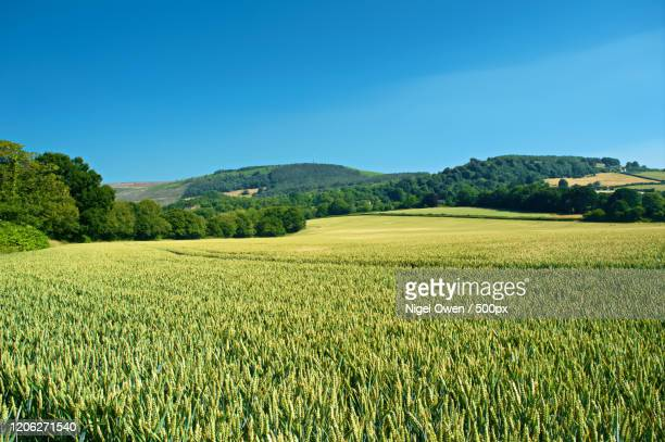 view of fields, lower machen, wales, uk - nigel owen stock pictures, royalty-free photos & images