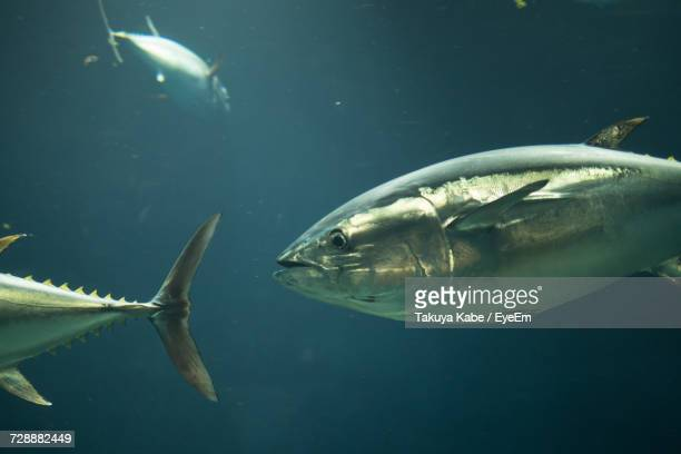 View Of Fish In Water
