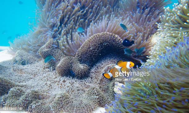 view of fish underwater - sea life stock pictures, royalty-free photos & images