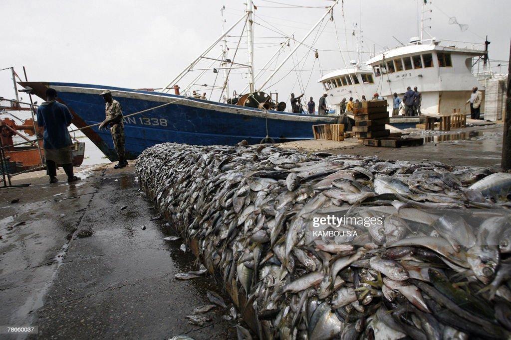 A view of fishes seized 27 December 2007 : Nachrichtenfoto
