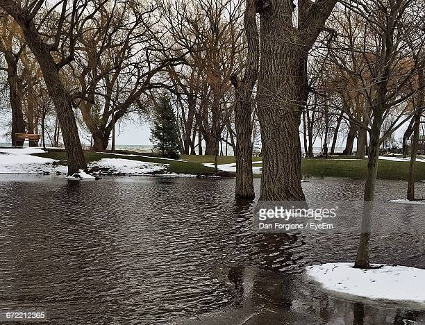 view of flooded park - extreme weather stock pictures, royalty-free photos & images