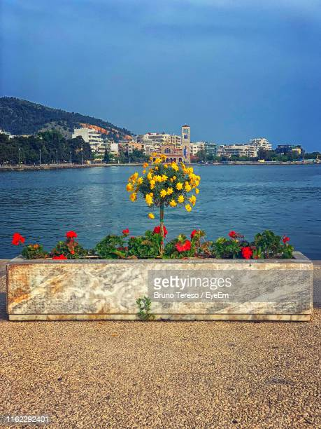 view of flowering plants by sea against buildings - volos stock pictures, royalty-free photos & images