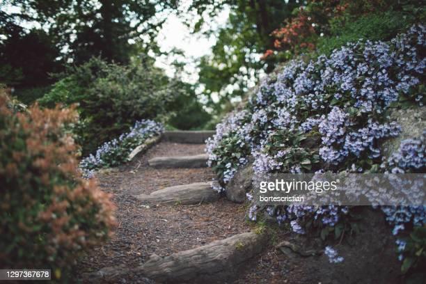 view of flowering plants in garden - bortes stock-fotos und bilder