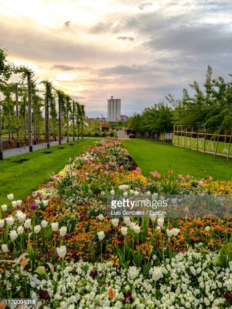 view of flowering plants in park against buildings - flower show stock pictures, royalty-free photos & images