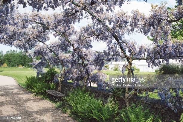 view of flowering plants in park - bortes stock pictures, royalty-free photos & images