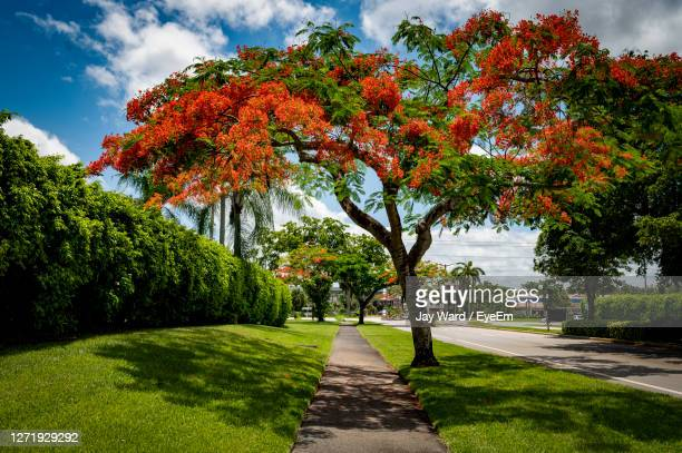 view of flowering plants in park - florida landscaping stock pictures, royalty-free photos & images
