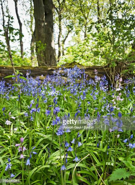 View Of Flowers Growing In Forest