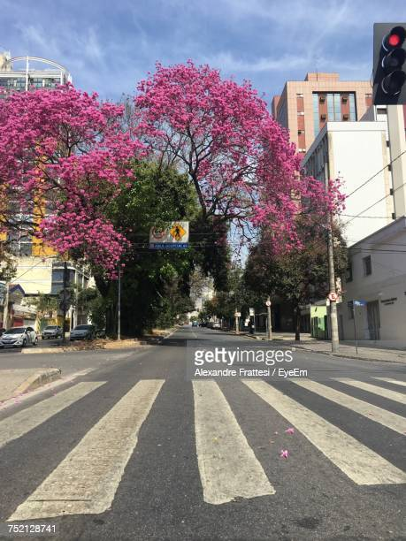 view of flowers in city - belo horizonte stock pictures, royalty-free photos & images