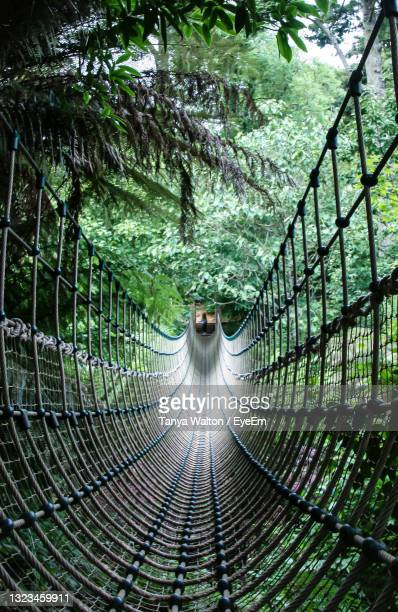 view of footbridge in forest - vertical stock pictures, royalty-free photos & images