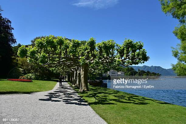 view of footpath along trees - fabrizio villa stock pictures, royalty-free photos & images