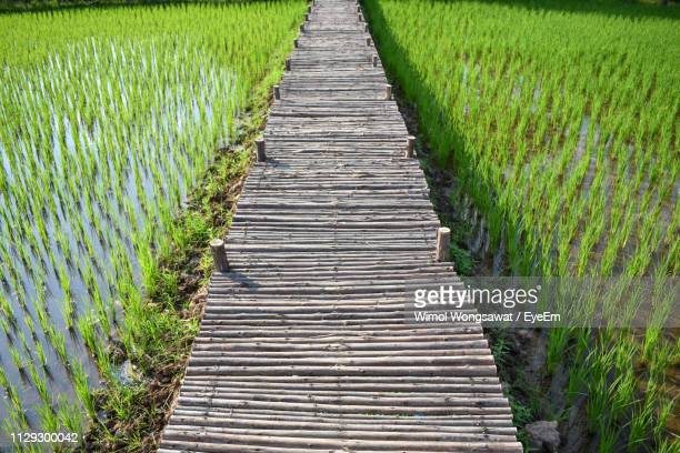 view of footpath in field - wimol wongsawat stock photos and pictures