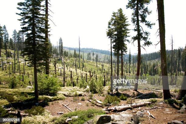 view of forest against sky - deforestation stock pictures, royalty-free photos & images