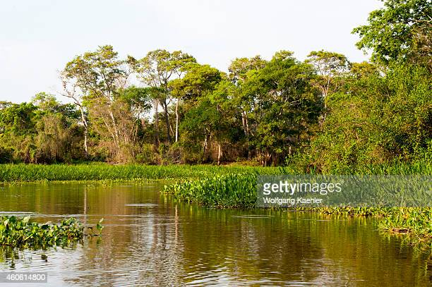 View of forest at a tributary of the Cuiaba River near Porto Jofre in the northern Pantanal, Mato Grosso province in Brazil.