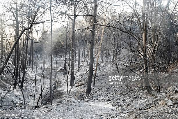 View of forest burned by wildfires in the Israeli Mediterranean coastal city of Haifa on November 25 2016 Tens of thousands of Israelis fled raging...