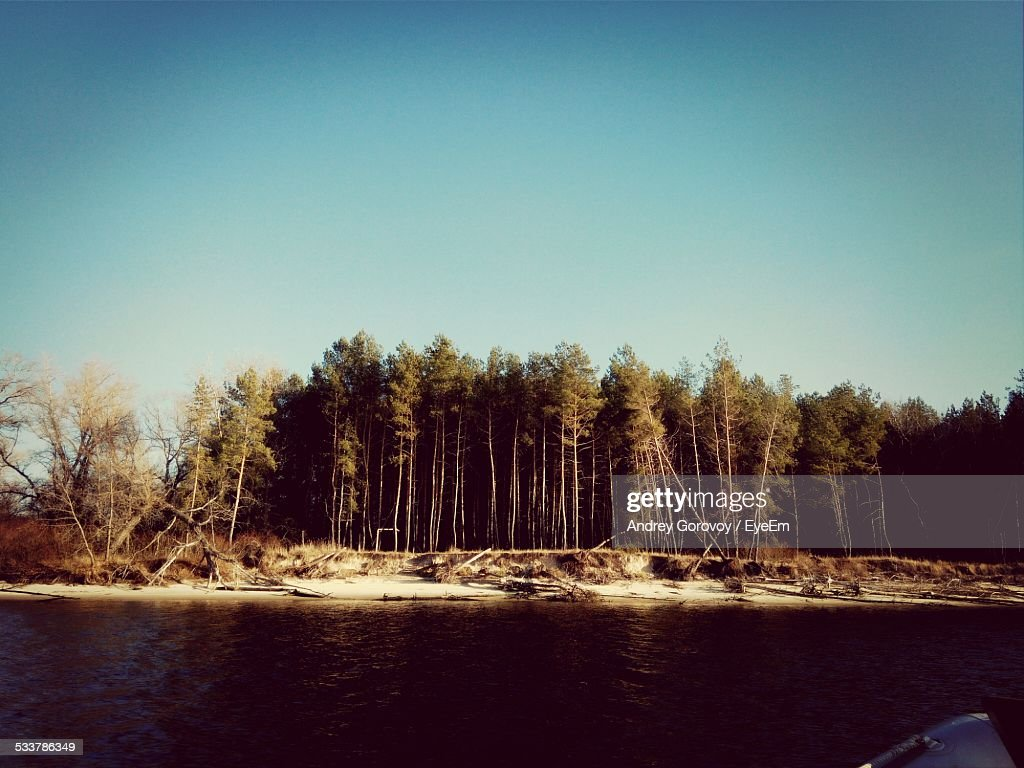 View Of Forest By Lake : Foto stock