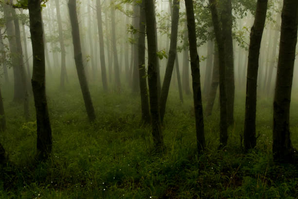 View of forest covered in fog