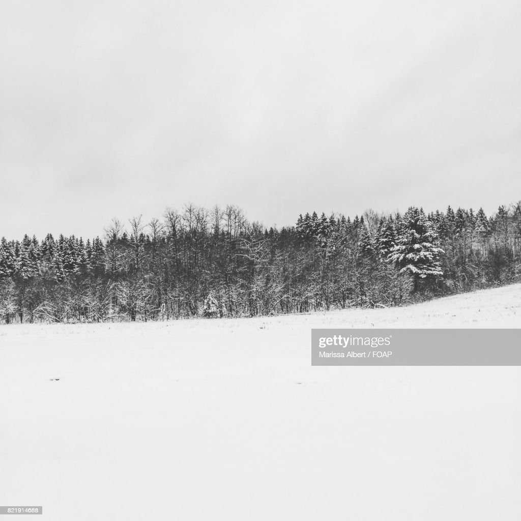 View of forest during winter : Stock Photo