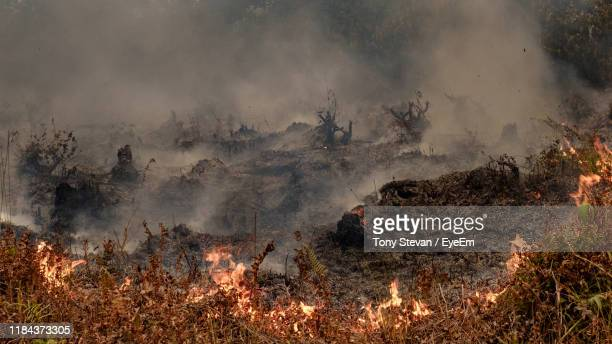 view of forest fire - central kalimantan stock pictures, royalty-free photos & images