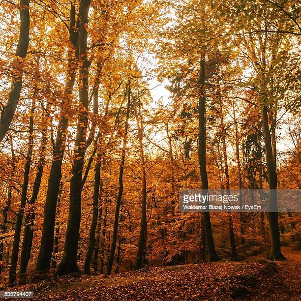 view of forest in autumn - pomorskie province stock photos and pictures