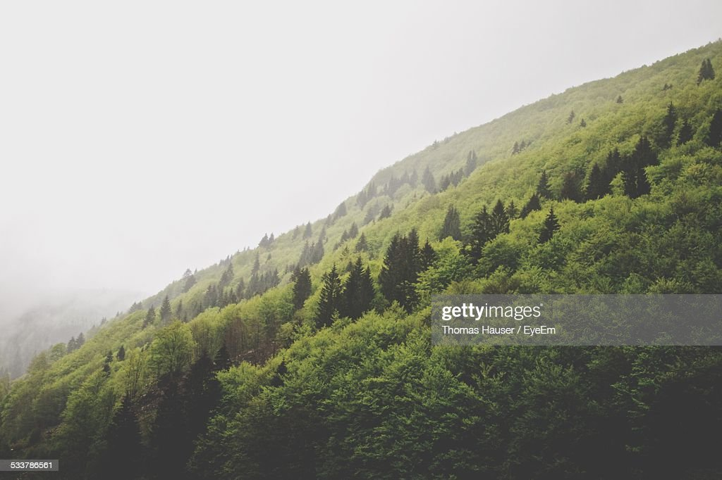 View Of Forest In Fog : Foto stock