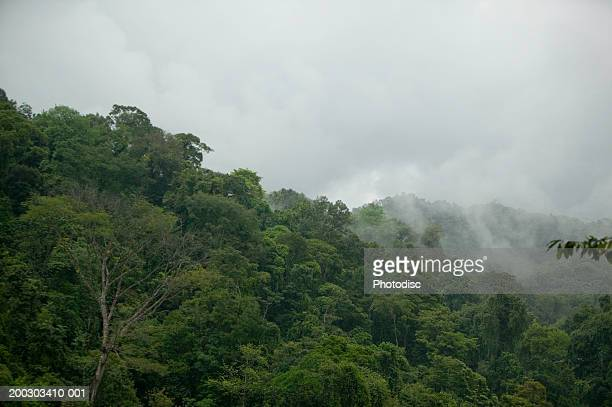 View of forest, low clouds level, elevated view