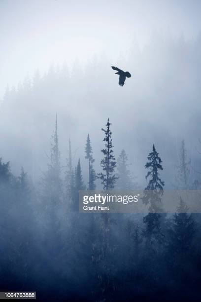 view of forest on cold foggy day - nature stock pictures, royalty-free photos & images