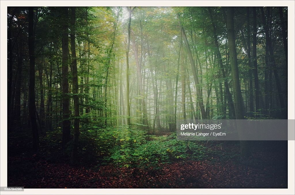 View Of Forest : Foto stock