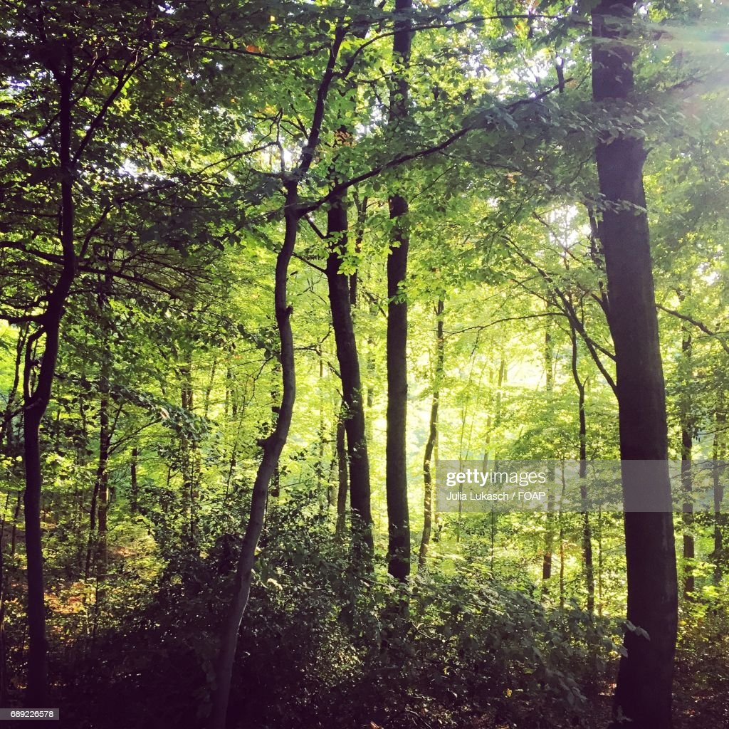 View of forest : Stock Photo