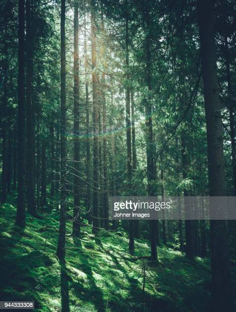 view of forest - forest stockfoto's en -beelden