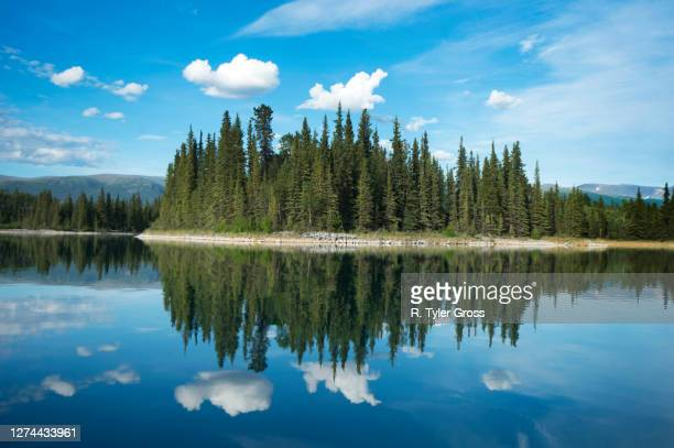 view of forest reflected in lake, british columbia, canada - british columbia stock pictures, royalty-free photos & images