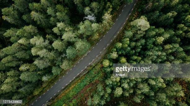 view of forest trees and road in nature from above landscape in sweden drone image - forest road stock pictures, royalty-free photos & images