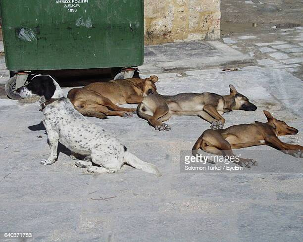 View Of Four Dogs Lying On Footpath