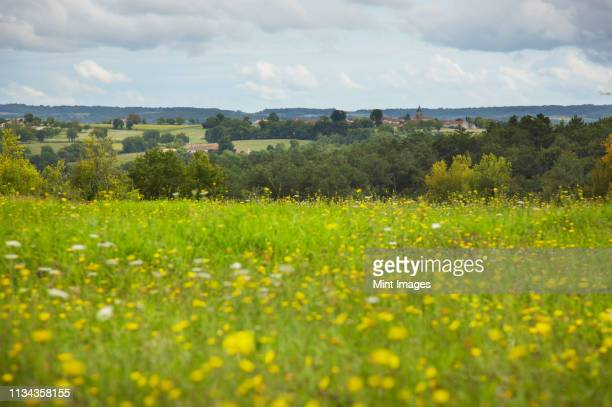 view of french village from field of wild flowers - scène rurale photos et images de collection