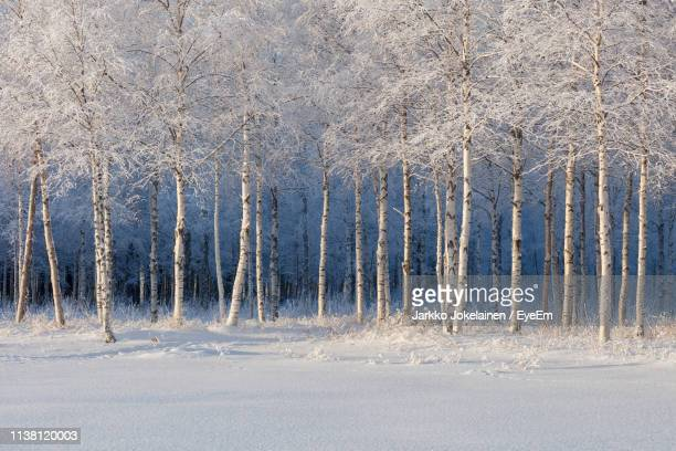 view of frozen trees on land - finland stock pictures, royalty-free photos & images