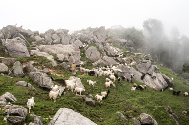 View Of Goats Grazing On Mountain Top