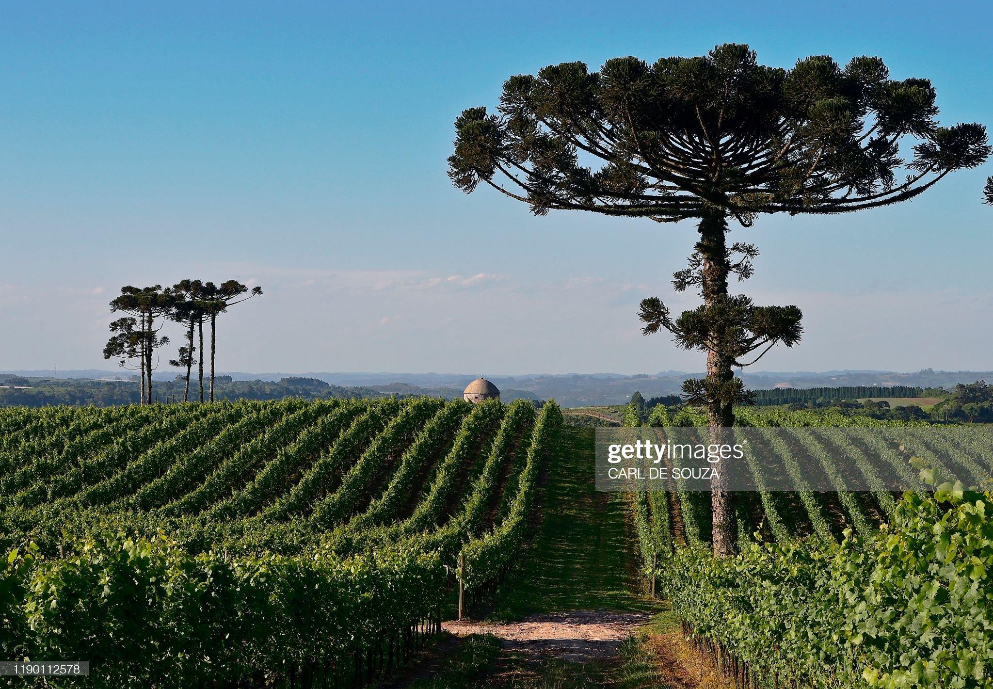 BRAZIL-SPARKLING WINE : Foto di attualità