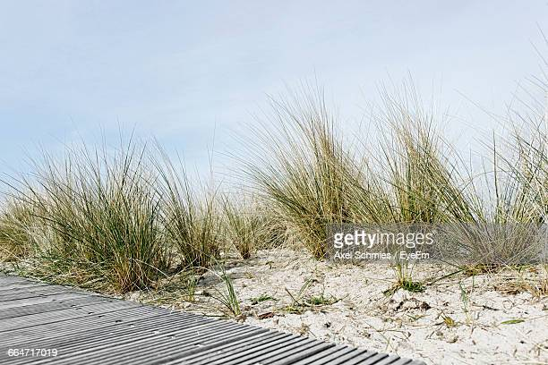 View Of Grassy Beach Against Clear Sky