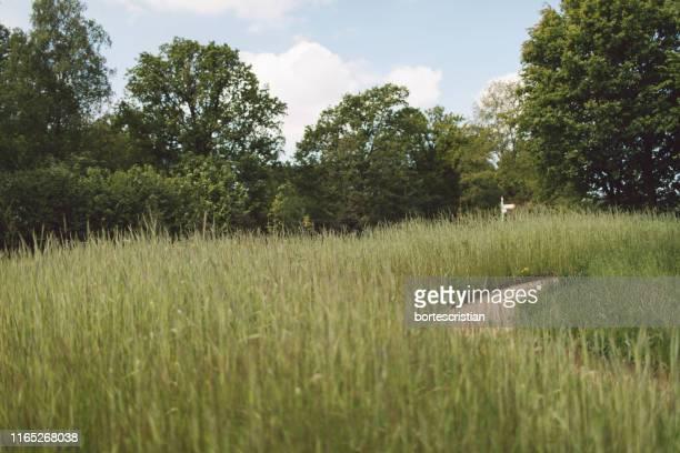 view of grassy field against trees - bortes stock-fotos und bilder