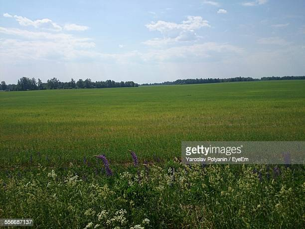 view of grassy landscape against cloudy sky - nizhny novgorod oblast stock photos and pictures