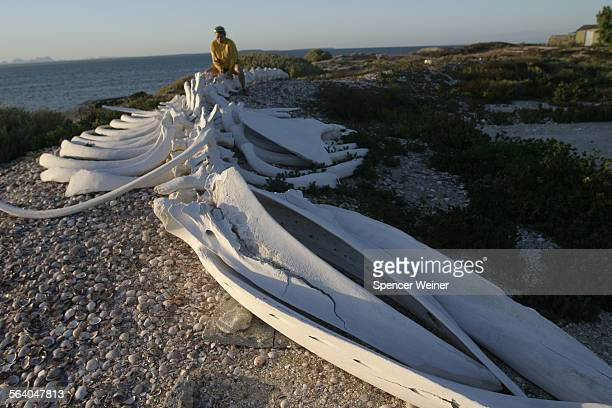View of Gray Whale skeleton at Antonio Aguilar Fish Camp San Ignacio Lagoon in Baja California A bidding war is developing over buying rights to land...