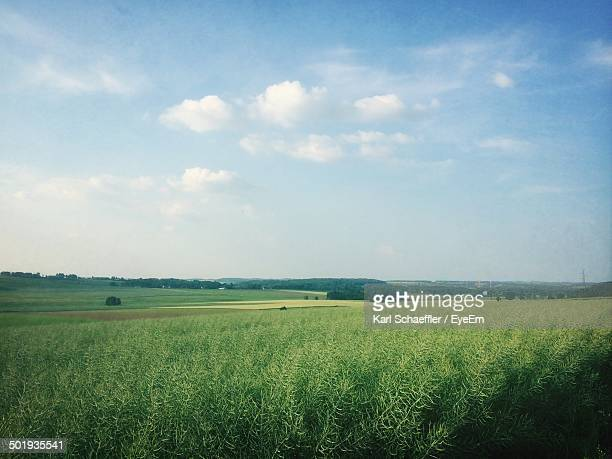 View of green fields against sky