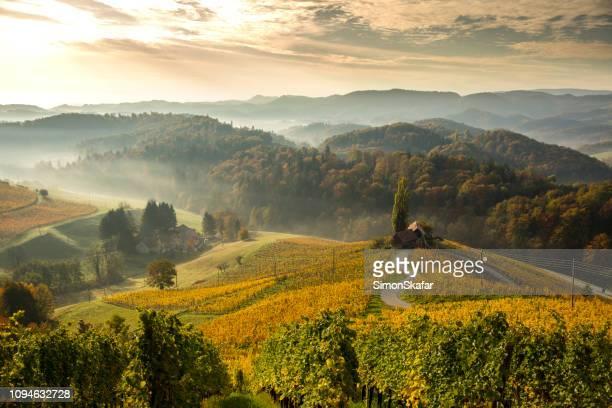 blick auf die grünen berge.  herzen zwischen weinbergen - slowenien stock-fotos und bilder