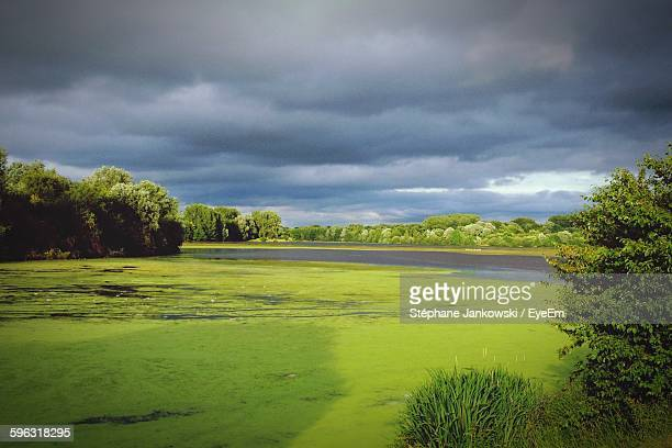 view of green pond on cloudy day - nord frankrijk stockfoto's en -beelden