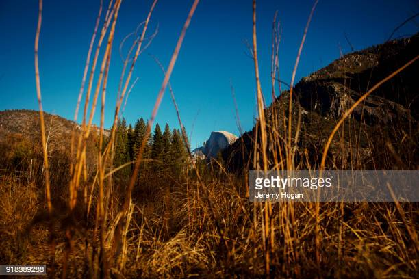 View of half dome from a meadow in Yosemite Valley during winter