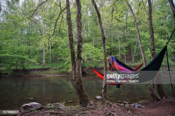 View Of Hammocks In Forest